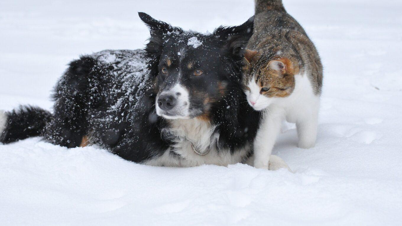 Pes s kočkou